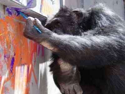 Wow, Hasil Lukisan Simpanse Terjual Rp 1 Juta
