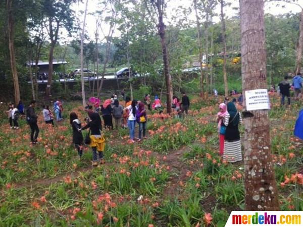 Penasaran dengan Kerusakan, Taman Amarylis Dibanjiri Pengunjung