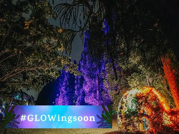 Kebun Raya Bogor Hadirkan Wisata Malam Glow in the Dark