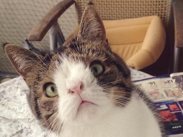 Wow, Kelainan Kromosom, Kucing Ini Mirip Kelinci