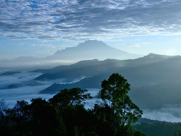 Mencapai 94 Meter, Pohon Tropis Tertinggi di Dunia Ada di Pulau Kalimantan