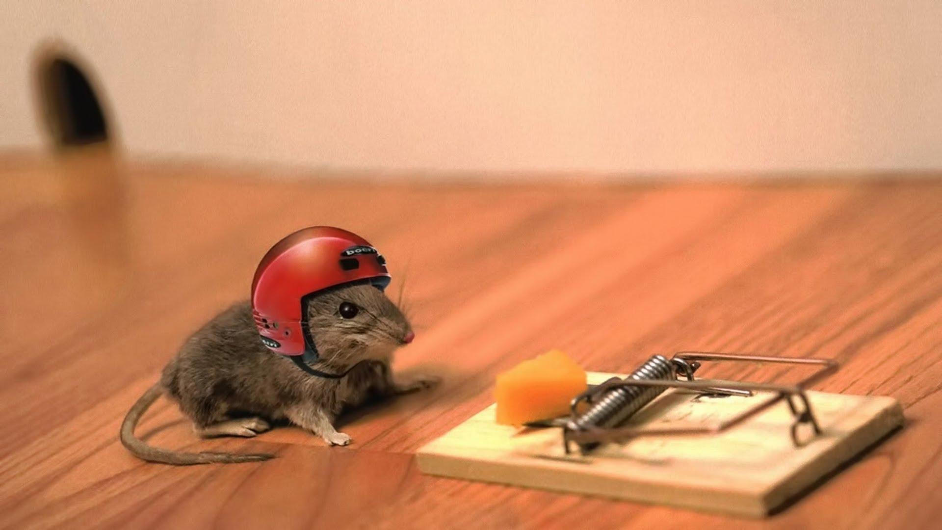 Cuma Dengan Nangkep Tikus Kamu Bisa Dapet Duit